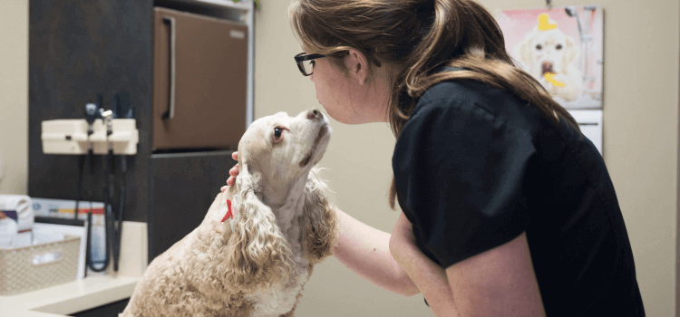 Preventative/Wellness Care for Dogs